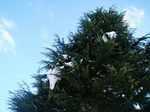 tree060111