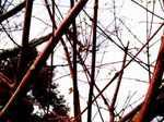tree060202