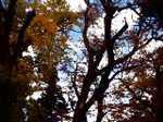 Tree061121
