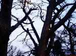 Tree061130