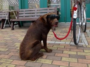 Dog200526