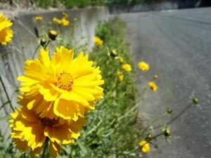 Flower200531