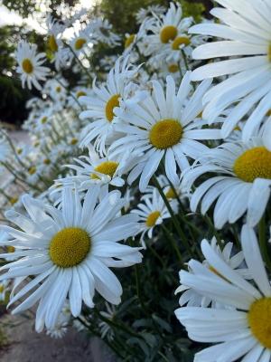 Flower210530